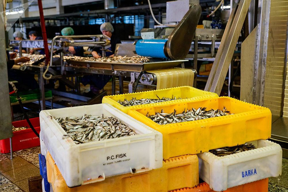 Только что выловленная рыба поступает на переработку