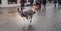Собака на улице Юрмалы, архивное фото