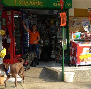 Ar piegādi mājās: labradors Kolumbijā sācis strādāt par kurjeru minimārketā