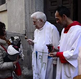 Mise astainajiem: Madridē priesteri deva Dieva svētību dzīvniekiem
