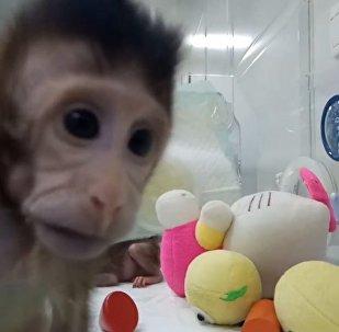 Китайские ученые показали первых в мире клонированных приматов