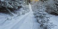 Следы на снегу, архивное фото