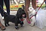 Свадьба животных в Перу