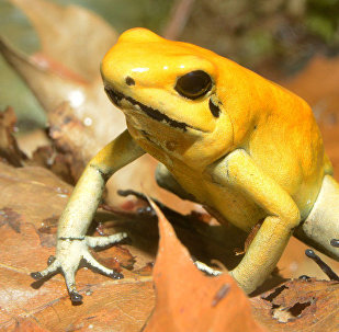 Лягушка в Тропическом доме Рижского зоопарка
