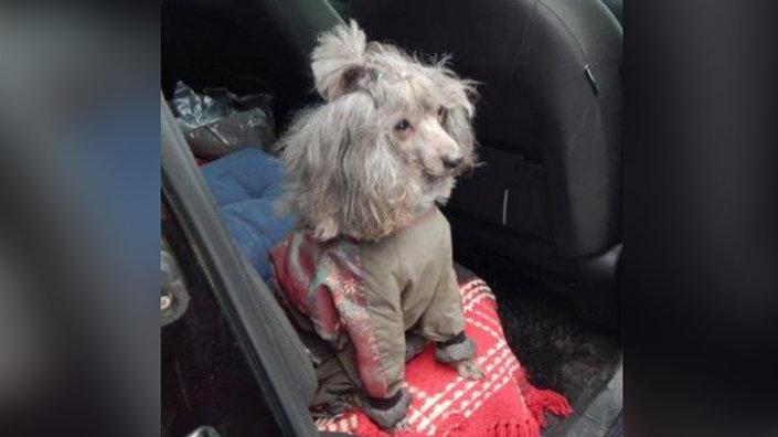 Россельхознадзор запретил ввоз собаки из Латвии в МАПП Шумилкино