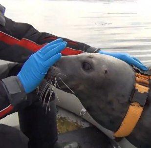 Murmanskā roņus gatavo kaujas uzdevumu izpildei