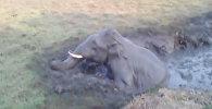 Спасение попавшего в колодец слоненка