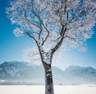 Снимок замерзшего дерева в Германии фотографов из проекта How Far From Home