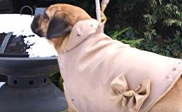 Золотой жакет для собаки