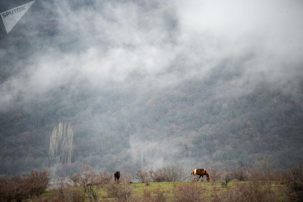 Лошади пасутся на лугу возле села Лучистое, Крым
