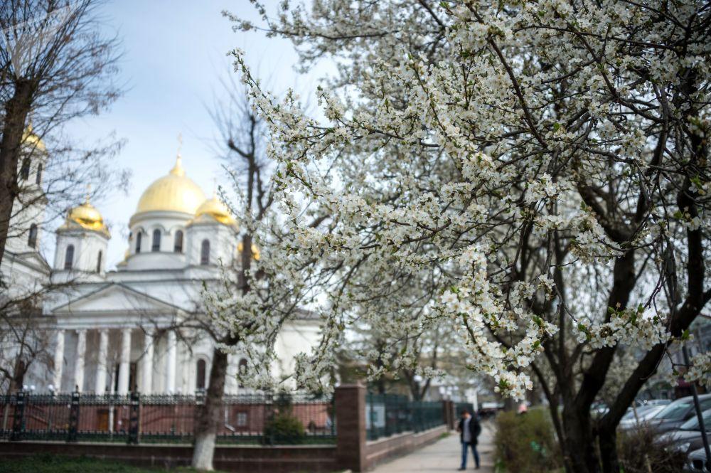 Цветущая вишня возле собора Александра Невского в Симферополе, Крым