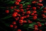 Выращивание цветов к 8 марта в теплице Великого Новгорода