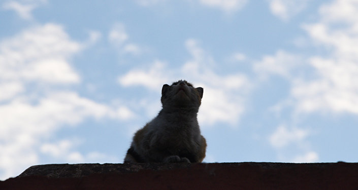 Кошка на крыше. Архивное фото