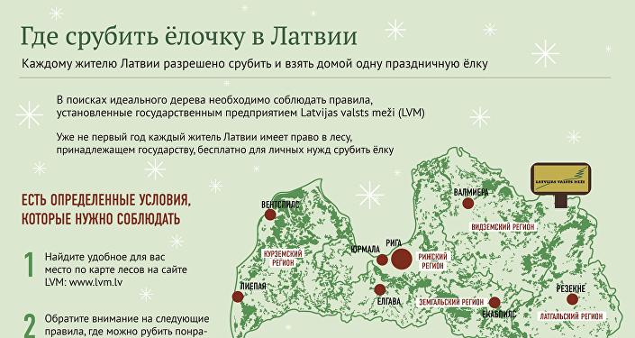 Где срубить рождественскую ёлку в Латвии