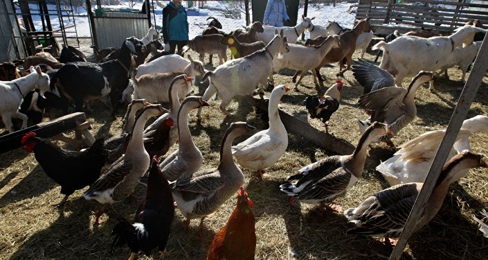 Latvijas zemnieki gatavi sākt protesta akcijas. Foto no arhīva