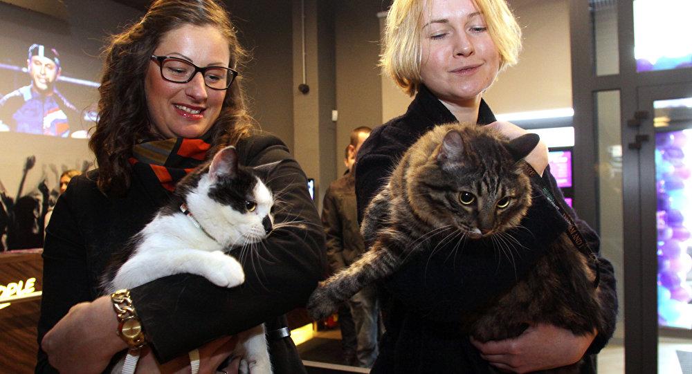 Rīgas domes kaķi Kuzja un Murziks